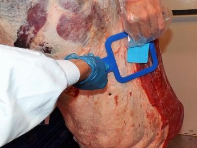 Meat Carcass Sampling Sponge